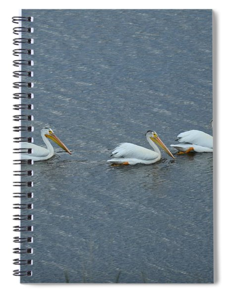 Triple Pelicans Lake John Swa Co Spiral Notebook