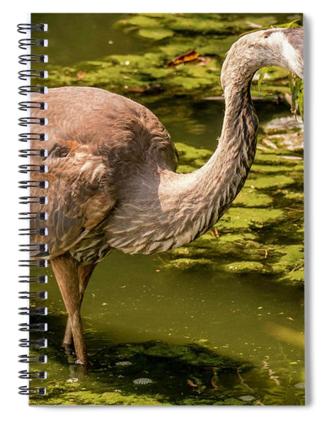 Juvenile Great Blue Heron Spiral Notebook