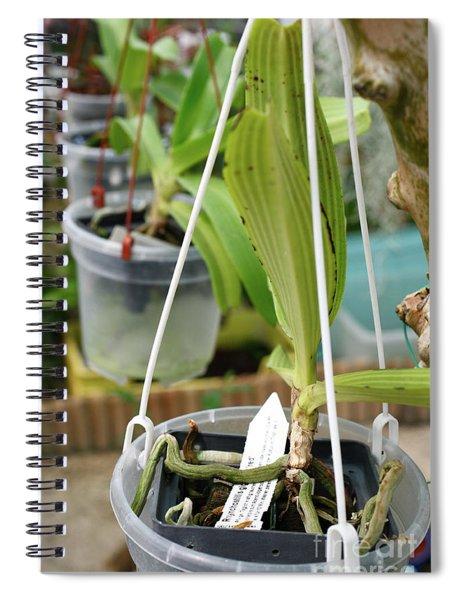 Juvenile Orchid Plants Spiral Notebook