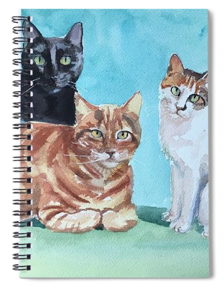 Kates's Cats Spiral Notebook