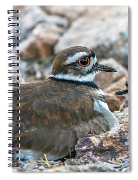 Kildeer Adult And Chick 6020-041818-1cr Spiral Notebook