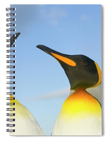 King Penguins Interacting Spiral Notebook