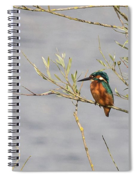 Kingfisher Waiting Spiral Notebook