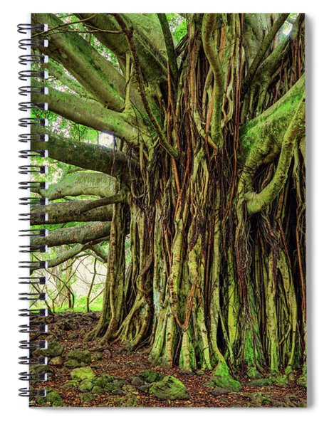 Kipahulu Banyan Tree Spiral Notebook