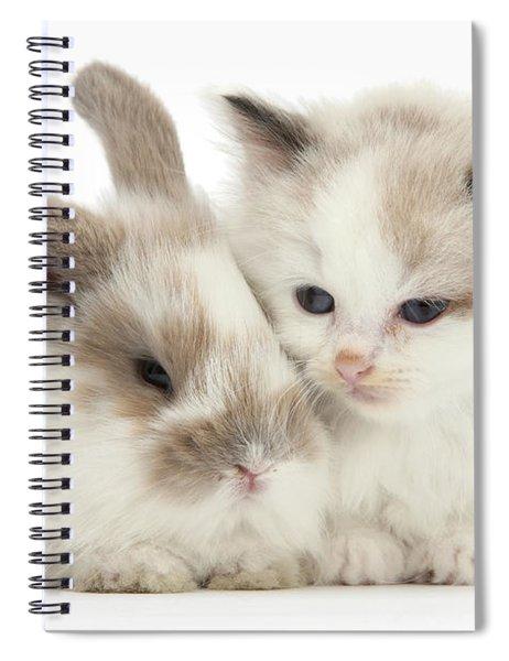 Kitten Cute Spiral Notebook