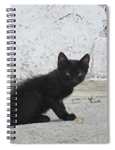Kitten In Iznajar Spiral Notebook