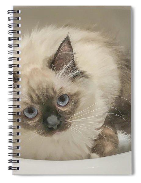 Kitty Blue Eyes Spiral Notebook