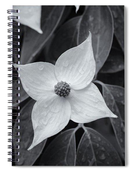 Kousa Dogwood Midnight Spiral Notebook
