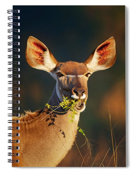 Kudu Portrait Eating Green Leaves Spiral Notebook