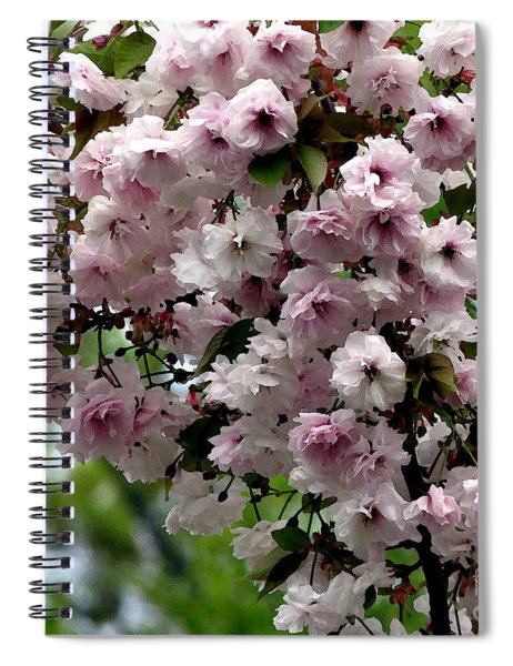 Japanese Cherry Tree Blossoms Highland Park Rochester Ny Watercolor Effect Spiral Notebook