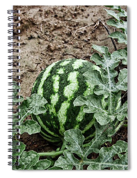 Ky Watermelon Spiral Notebook