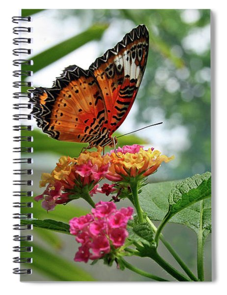 Lacewing Butterfly Spiral Notebook