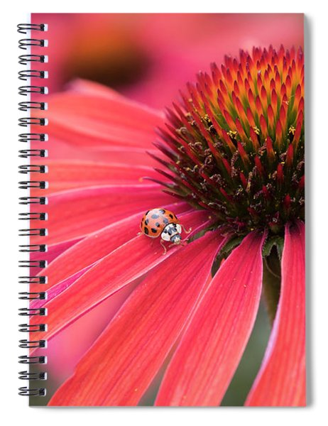Ladybird And Echinacea Spiral Notebook