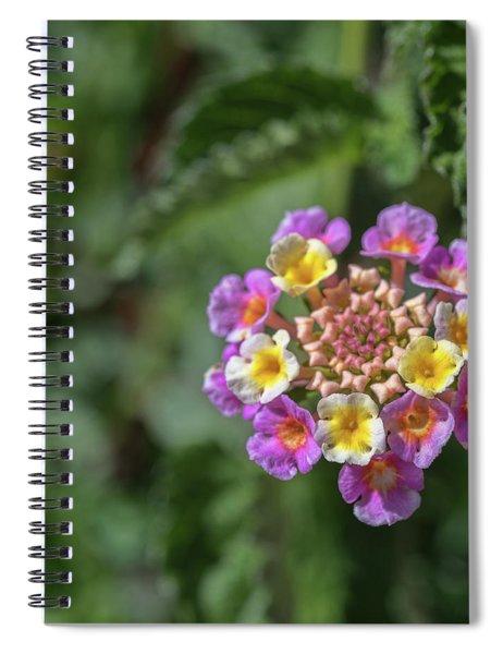 Lantana In Bloom Spiral Notebook