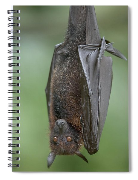 Large Flying Fox Pteropus Vampyrus Spiral Notebook