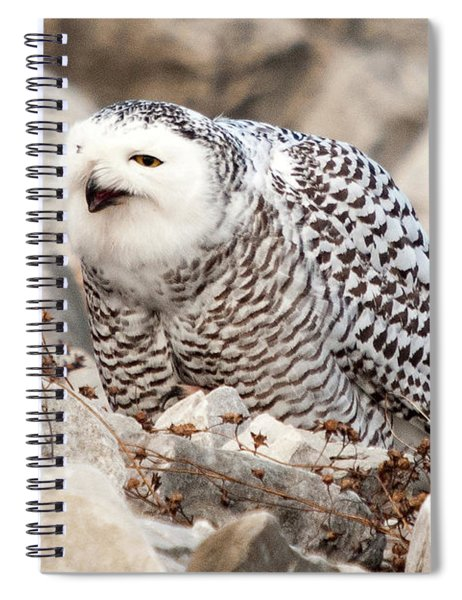 Laughing Owl Spiral Notebook