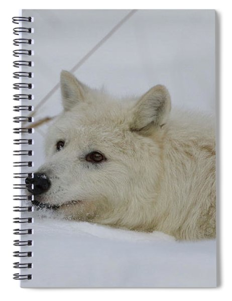 Laying In The Snow Spiral Notebook