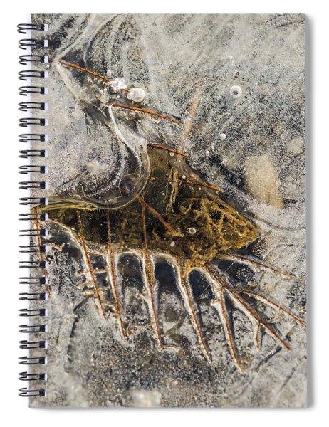 Leaf Veins In Ice Spiral Notebook