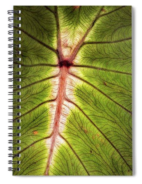 Leaf With Veins Spiral Notebook