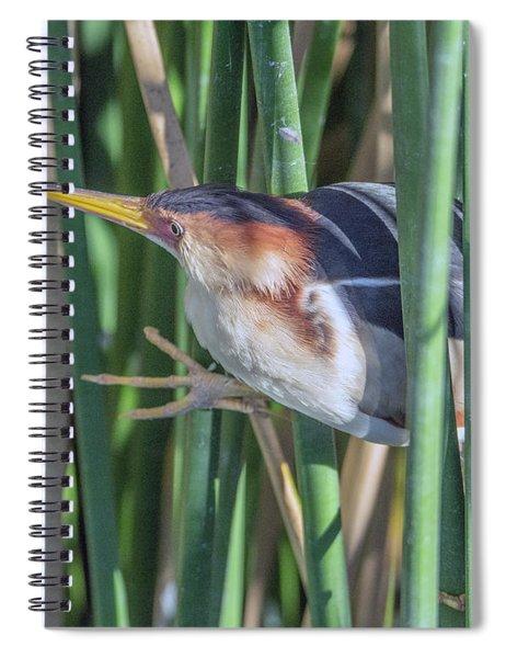 Least Bittern 3251-032918-1cr Spiral Notebook