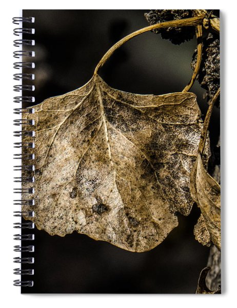 Leaves 4 Spiral Notebook