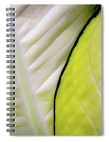 Leaves In White Spiral Notebook