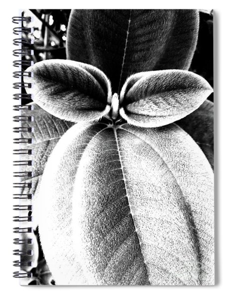 Leaves No. 36 Spiral Notebook