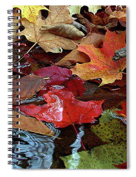 Leaves Of Color Spiral Notebook