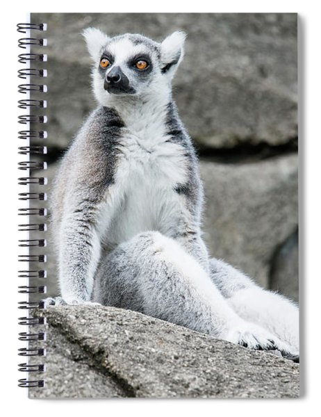 Lemur The Cutie Spiral Notebook
