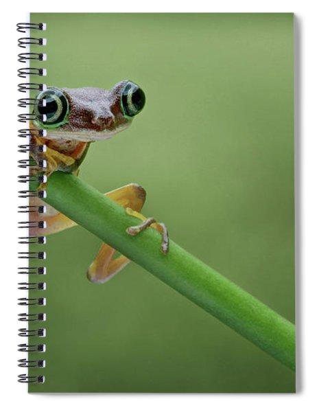 Lemur Tree Frog - 2 Spiral Notebook