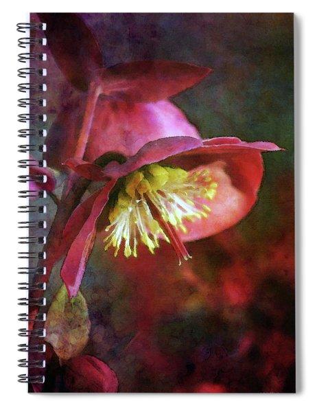 Lenten Rose Bowing To The Sun 8712 Idp_2 Spiral Notebook