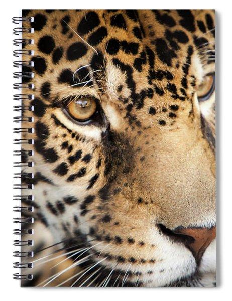Leopard Face Spiral Notebook by John Wadleigh