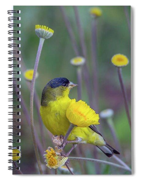 Lesser Goldfinch 1806-031318-1cr Spiral Notebook
