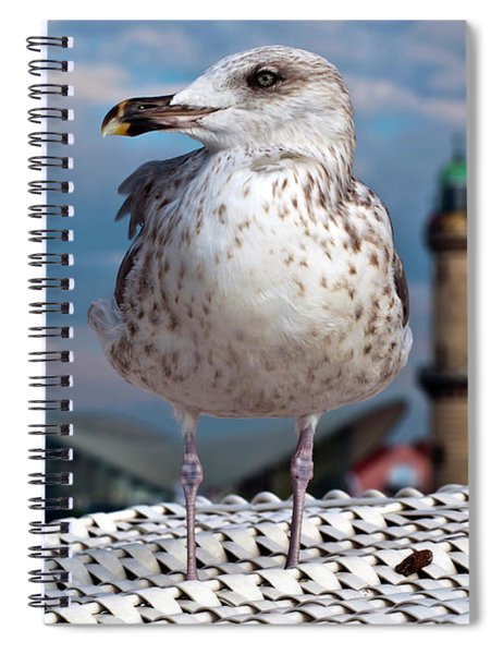 Liberty Of An Pacific Gull Spiral Notebook