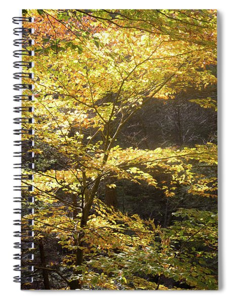 Light In The Leaves Spiral Notebook