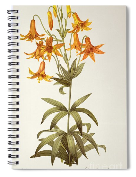 Lilium Penduliflorum Spiral Notebook