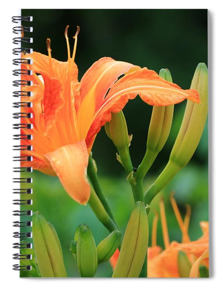 Lily Of The Evening Spiral Notebook