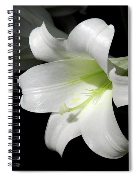 Lily In The Light Spiral Notebook