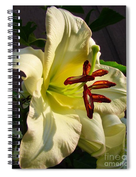 Lily's Morning Spiral Notebook