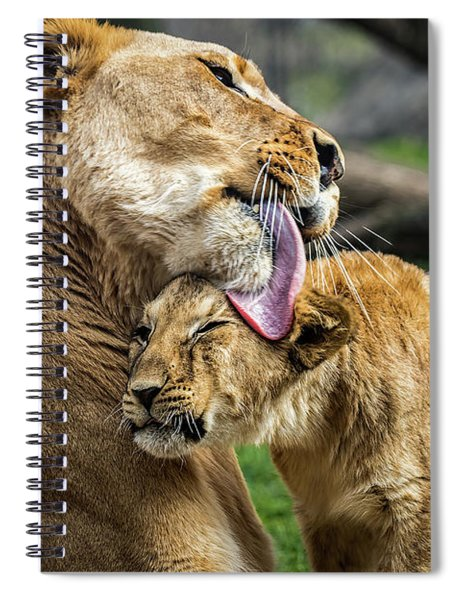 Lion Mother Licking Her Cub Spiral Notebook