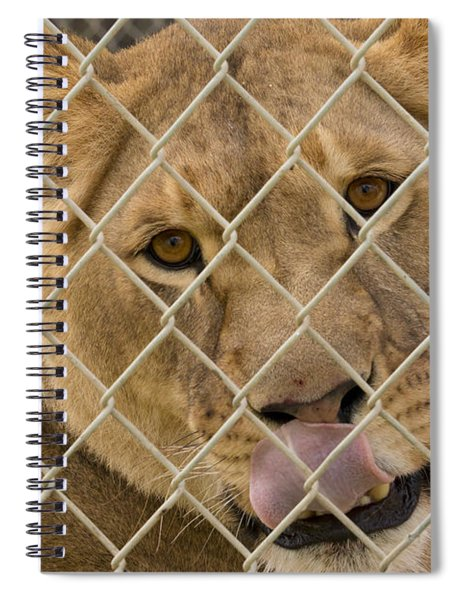 Lioness Licks Spiral Notebook