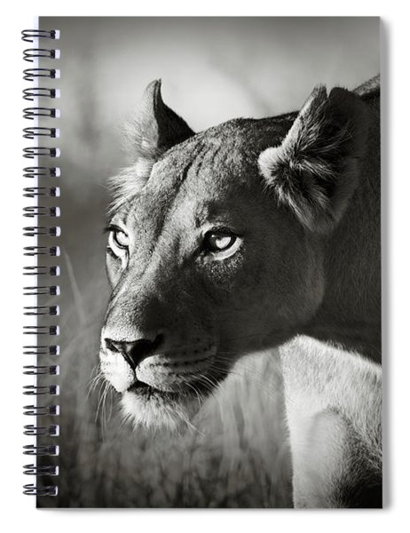 Lioness Stalking Spiral Notebook