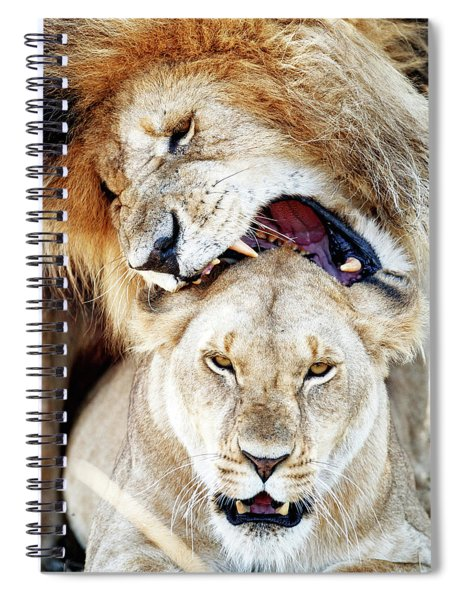 Lions Mating Giving Love Bite Spiral Notebook