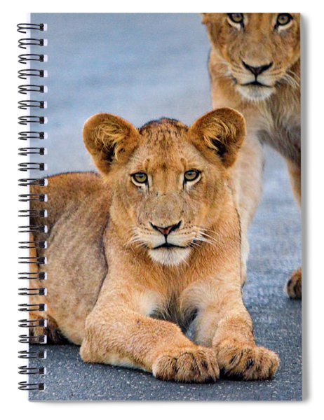 Lions Stare Spiral Notebook