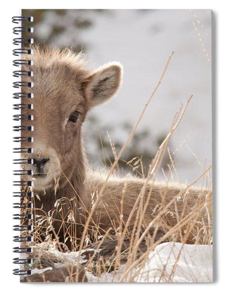 Little Bighorn Spiral Notebook