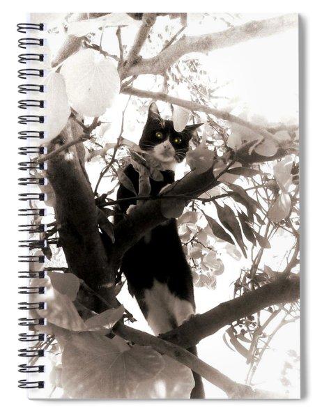 Little Kitty Spiral Notebook