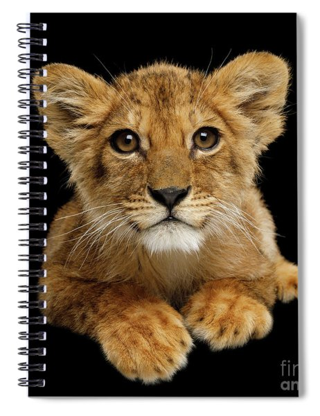 Little Lion Spiral Notebook