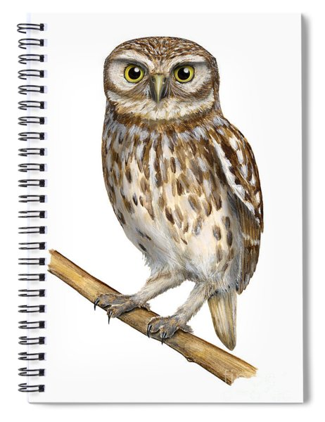 Little Owl Or Minerva's Owl Athene Noctua - Goddess Of Wisdom- Chouette Cheveche- Nationalpark Eifel Spiral Notebook