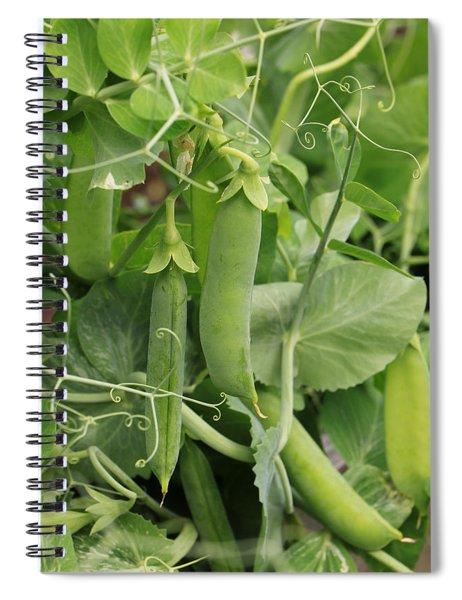 Little Peas Of Summer Spiral Notebook