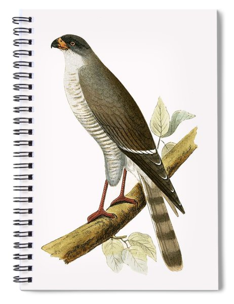 Little Red Billed Hawk Spiral Notebook